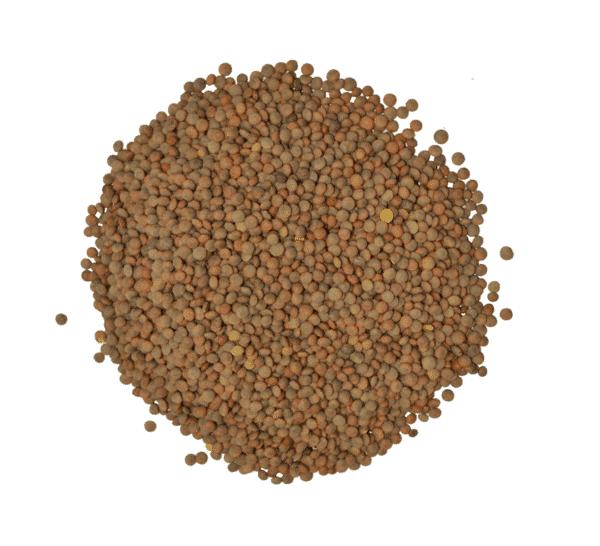 Lenteja pardina nacional a granel en nuestra tienda online de frutos secos secofrut.com